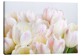 Stampa su tela  Pastel-colored tulips 06 - Nailia Schwarz