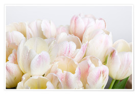 Poster Premium Pastel-colored tulips 06
