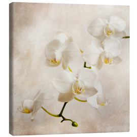 Tela  white orchid - Hannes Cmarits