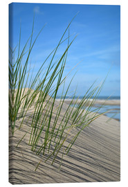 Stampa su tela  Dune grasses before playscape - Susanne Herppich