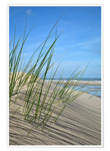 Poster Premium Dune grasses before playscape