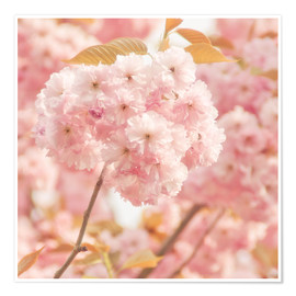 Poster Premium  Japan Cherry - INA FineArt
