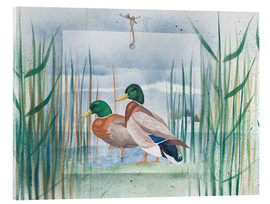 Stampa su vetro acrilico  Pair of wild ducks - Franz Heigl