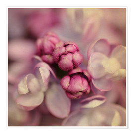Poster Premium  Lilac - Evelyn Meyer