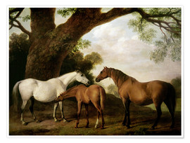 Poster Premium Two Shafto Mares and a Foal