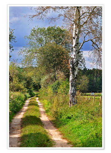 Poster Premium Forest path with Birch