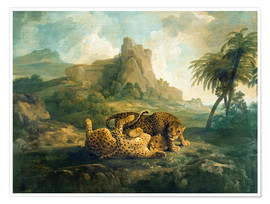Poster Premium Leopards at Play