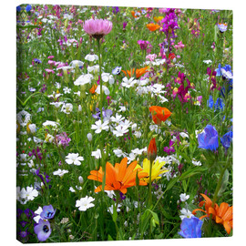 Tela  Flowers Meadow - blackpool