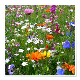 Poster Flowers Meadow
