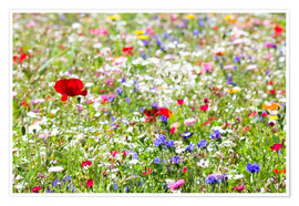 Poster Premium  Colorful Meadow - Suzka