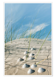 Poster Premium Dune with sea shells