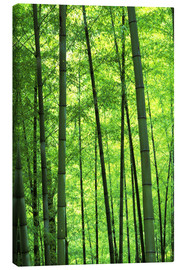 Tela  Tree trunks in a bamboo forest - Keren Su