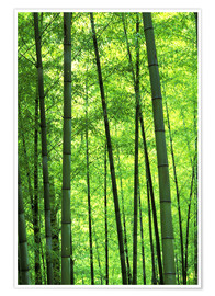Poster  Tree trunks in a bamboo forest - Keren Su