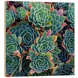 Stampa su legno  Succulente colorate - David Wall