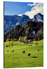 Alluminio Dibond  Alpine views with forest and pasture - Ric Ergenbright