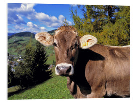 Forex  Startled Swiss cow in the Dolomites - Ric Ergenbright