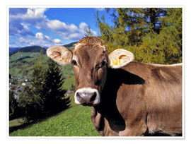 Poster  Startled Swiss cow in the Dolomites - Ric Ergenbright