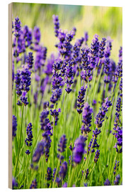 Legno  Close up of lavender flowers in a field - Rob Tilley