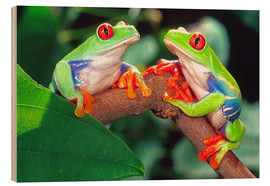 Legno  Red Eye Treefrog Pair - David Northcott