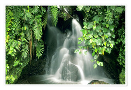 Poster  Small waterfall in the rainforest - Kevin Schafer