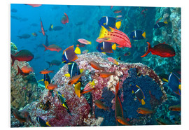 Forex  Galapagos Islands - the underwater world of colorful tropical fish - Paul Souders