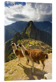 Vetro acrilico  Llamas and a view of Machu Picchu - Howie Garber
