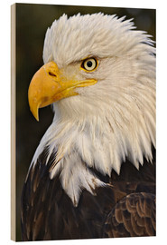 Legno  Head of a bald eagle - Adam Jones