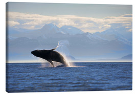 Tela  Humpback Whale on Frederick Sound - Paul Souders