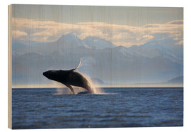 Legno  Humpback Whale on Frederick Sound - Paul Souders