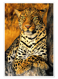 Poster  African Leopard - Dave Welling