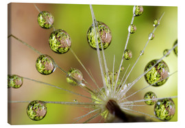 Tela  Water drops on a dandelion - Christopher Talbot Frank