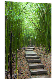 Schiuma dura  Wooden path through a bamboo forest - Jim Goldstein