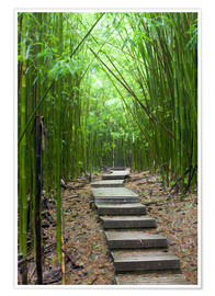 Poster  Wooden path through a bamboo forest - Jim Goldstein