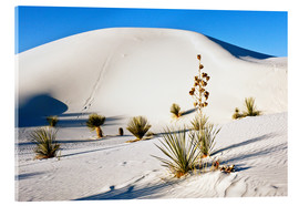 Vetro acrilico  White Sands National Monument - Transverse Dunes and Soaptree Yucca - Bernard Friel
