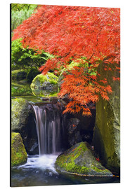 Alluminio Dibond  Waterfall and Japanese maple in autumn - Don Paulson