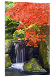 Don Paulson - Waterfall and Japanese maple in autumn