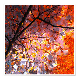 Poster Premium autumn tree I