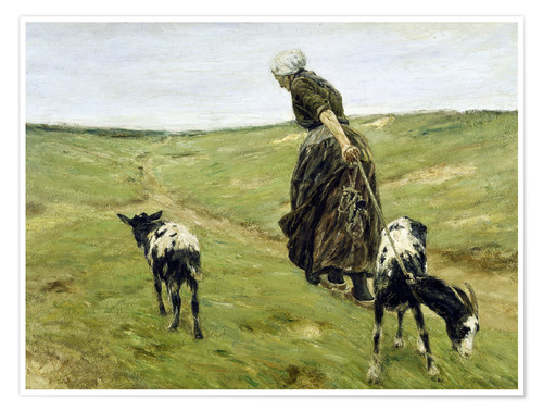 Poster Premium Woman with goats in the dunes