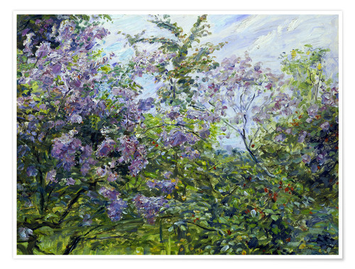 Poster Premium Blossoming lilac. About 1921