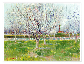 Poster Premium Blossoming orchard