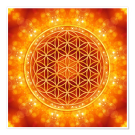 Poster  Flower of Life - Golden Age - Dolphins DreamDesign