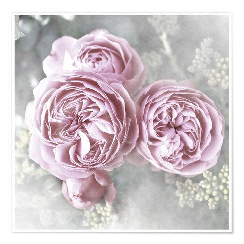 Poster Roses Shabby Style