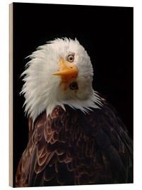 Stampa su legno  eagle - Wolfgang Dufner