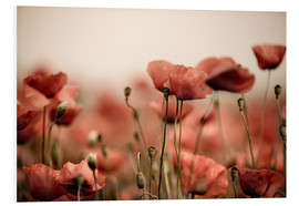 Forex  Red Poppy Flowers 05 - Nailia Schwarz