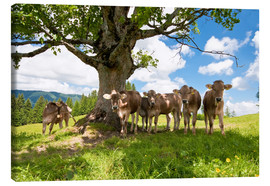 Stampa su tela  Young Cows - Jan Schuler