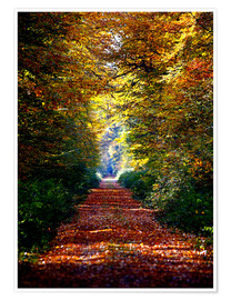 Poster Premium  Forest away - Renate Knapp