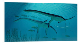 Stampa su schiuma dura  Three Plesiosaurus dinosaurs migrate with a school of fish. - Corey Ford