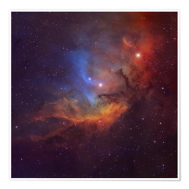 Poster Premium The Tulip Nebula in Cygnus