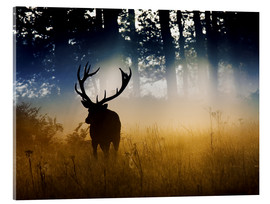 Vetro acrilico  A red deer in the woods - Alex Saberi