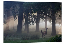 Vetro acrilico  Two red deer, Cervus elaphus, on a foggy clearing - Alex Saberi